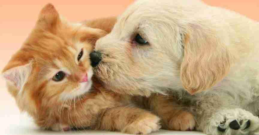 EmotionalPetSupport-Emotional-Support-Animal