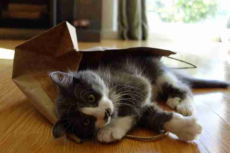 Why-Do-Cats-Like-Boxes-and-Bags