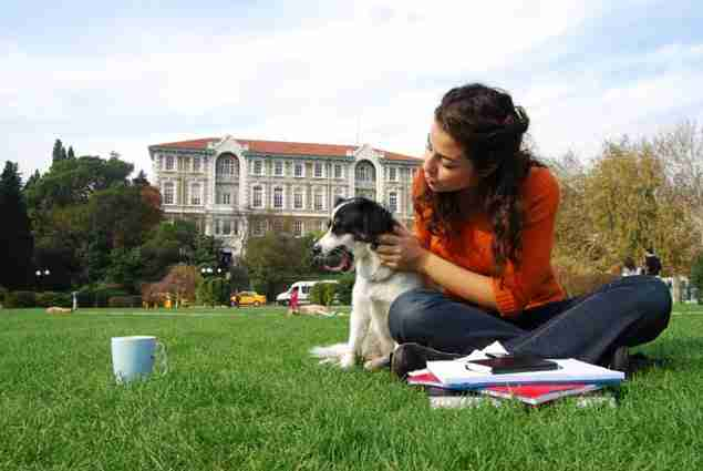 pets-in-college-and-university-dorms