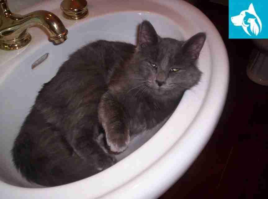 cat in sink