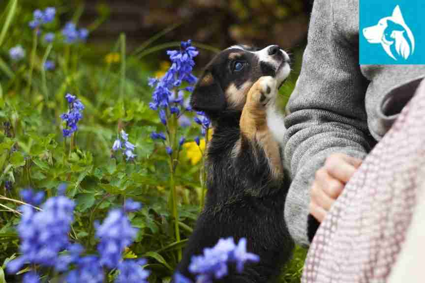 Emotional Pet Support School