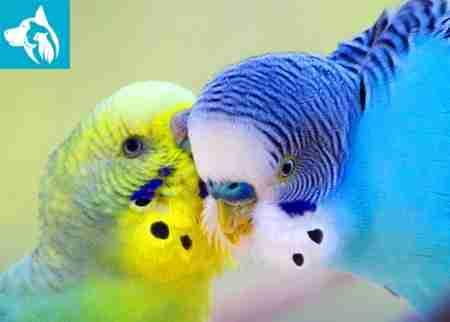 Emotional Support Animal Bird
