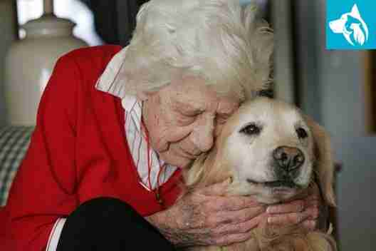 Emotional Support Animal Seniors