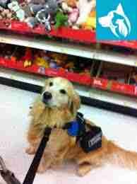 Emotional Support Animal Service Dog