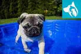 Summer Emotional Support Animal pool