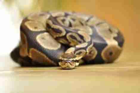 snake esa