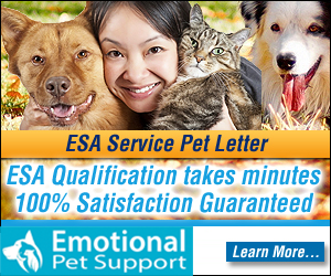 widgets emotional pet support 300x250 Banner