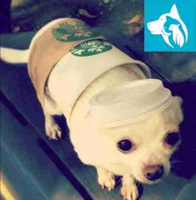Halloween star bucks esa dog