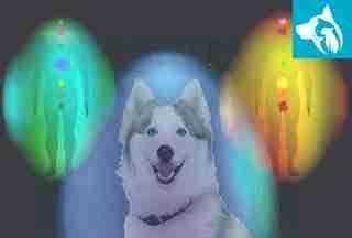 autism emotional support dog