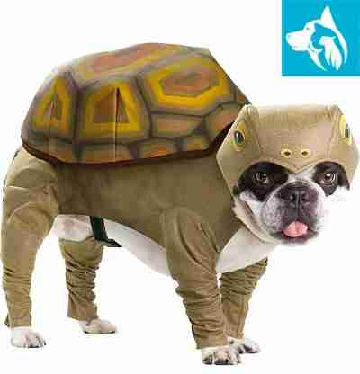 halloween turtle emotional support dog