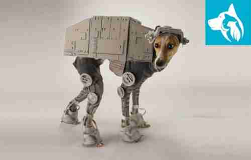 halloween star wars companion dog