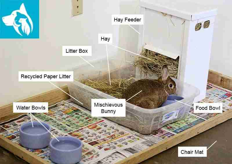 bunny companion animal home