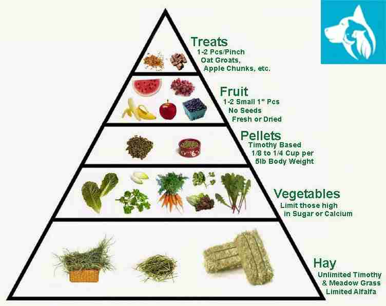 bunny food pyramid esa