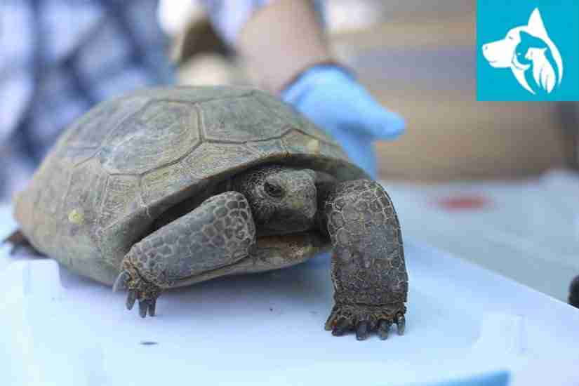 care tips for pet turtles