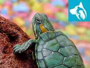 emotional support turtles