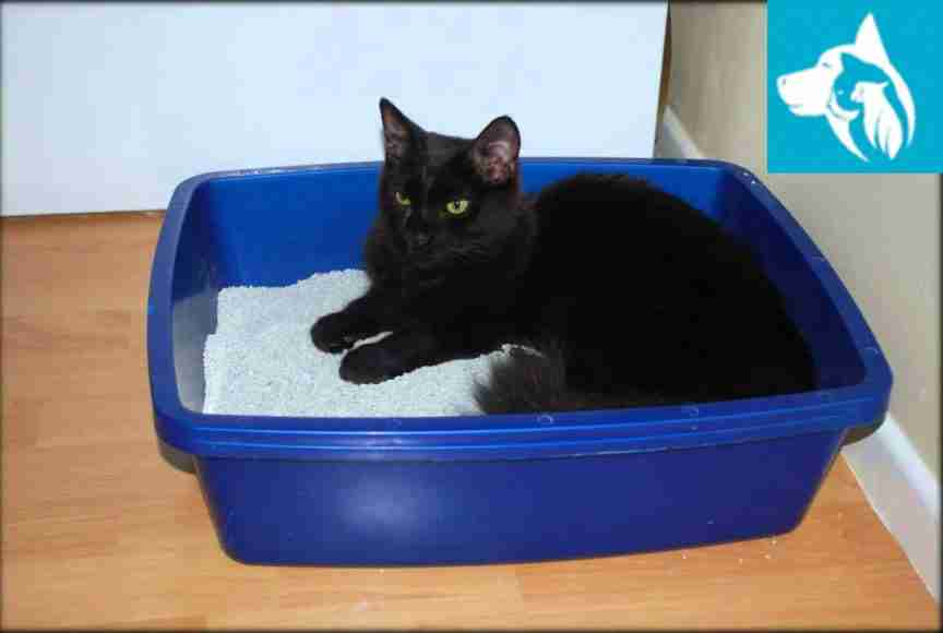 litter box cat emotional support animal