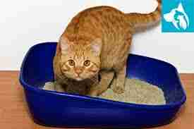 litter box cat training