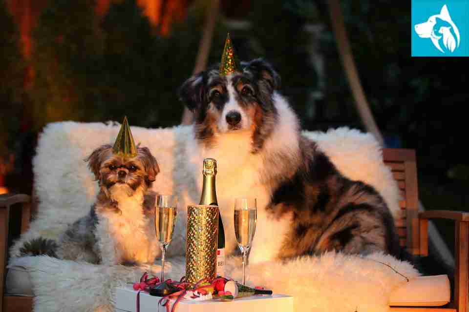 new years resolution emotional support animal