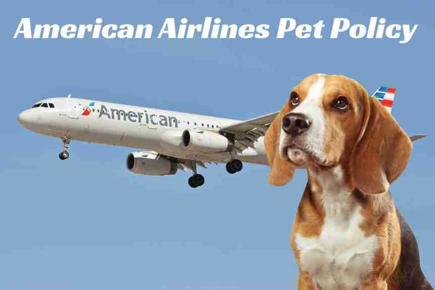 American Airlines Emotional Pet Support