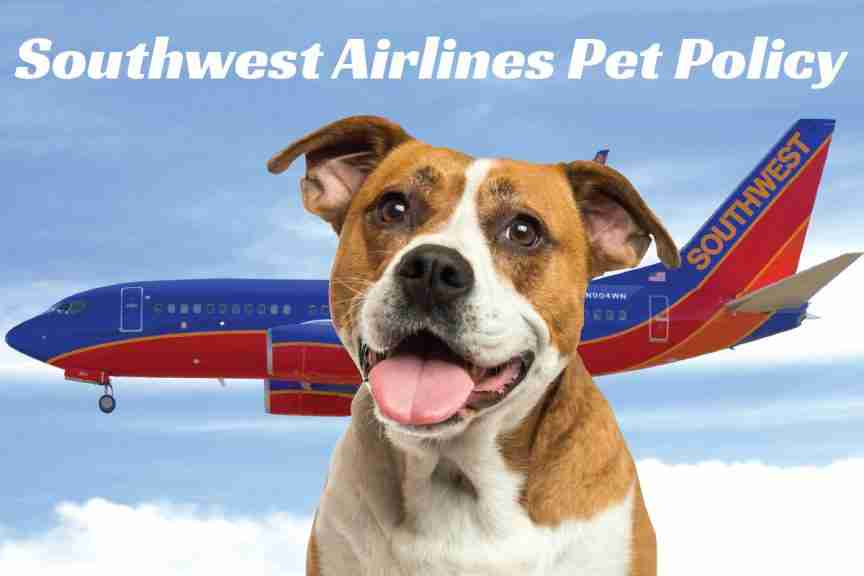 Southwest Airlines Emotional Pet Support