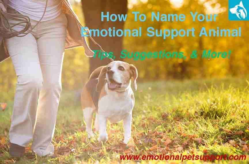 Name Your Emotional Support Animal