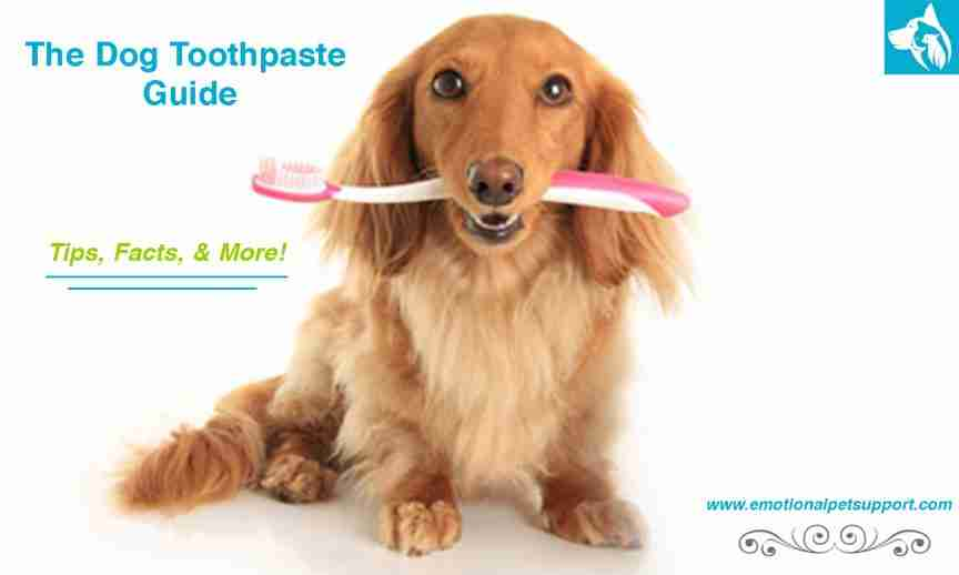 The-Dog-Toothpaste-Guide