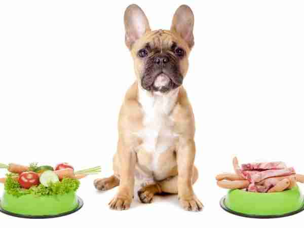dog-raw-foods-emotional-support