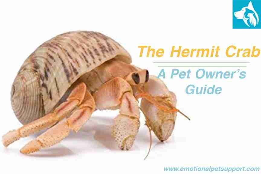 The Hermit Crab Emotional Support Animal