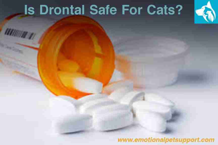 Drontal safe for cats