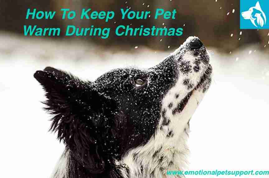keep-pet-warm-christmas