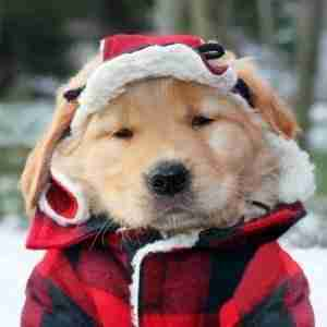 warm-dog-christmas