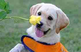 Allergra dog sniffing flower