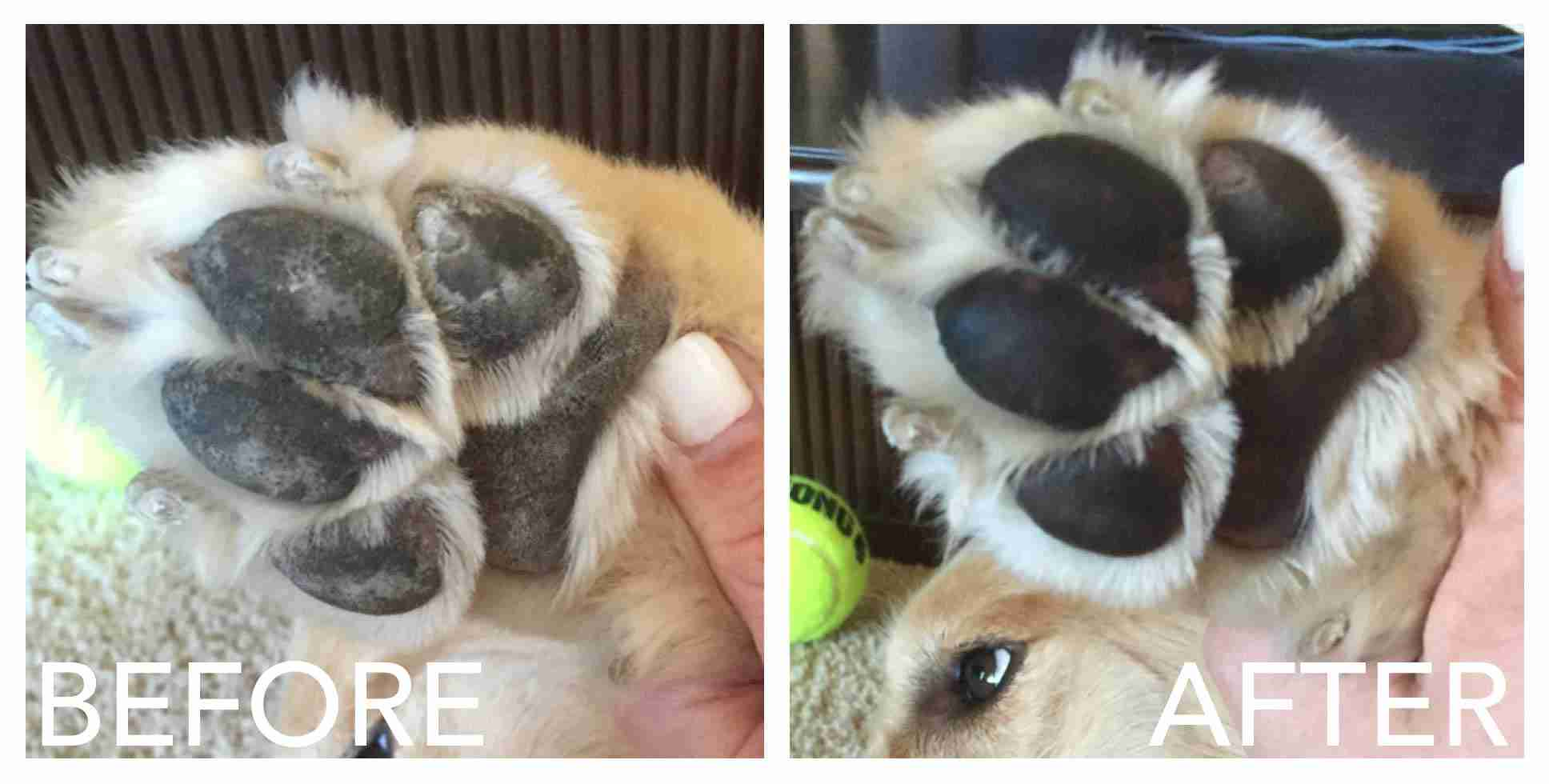 Dog Paw Balm before after