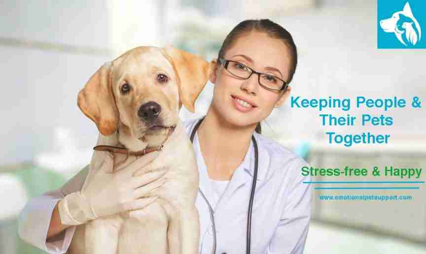 Emotional Support Animal Letter Online Licensed Therapists
