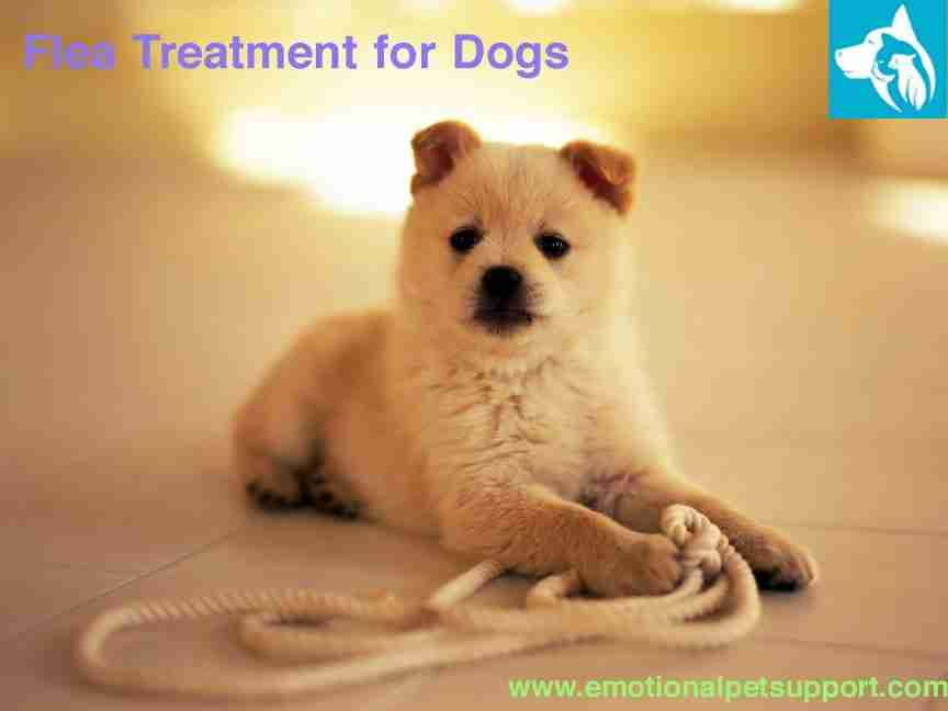 flea treatment for dogs