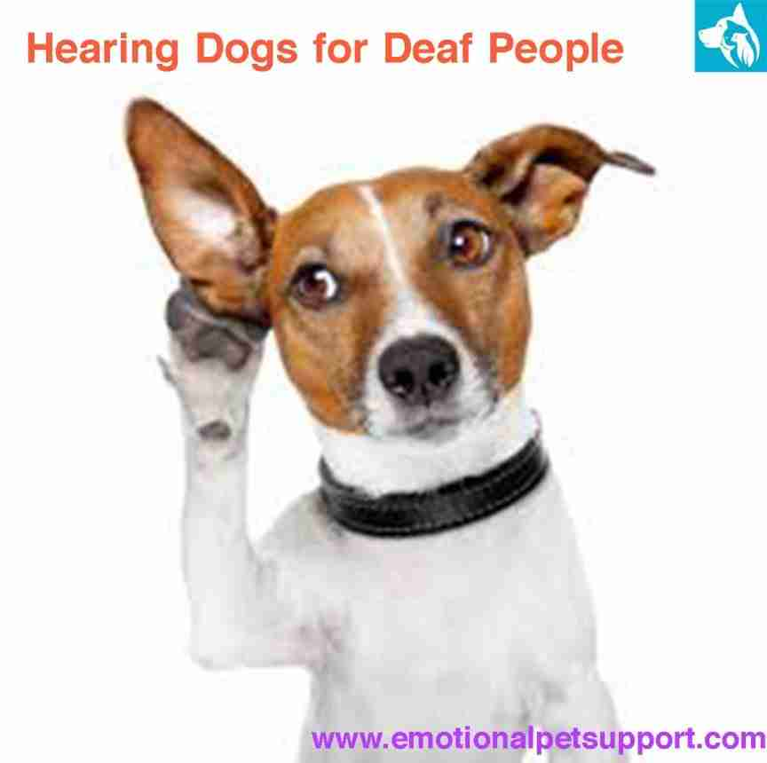 hearing dogs deaf people
