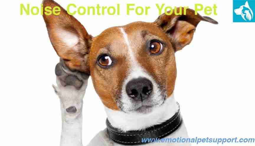 Noise Control For Your Pet