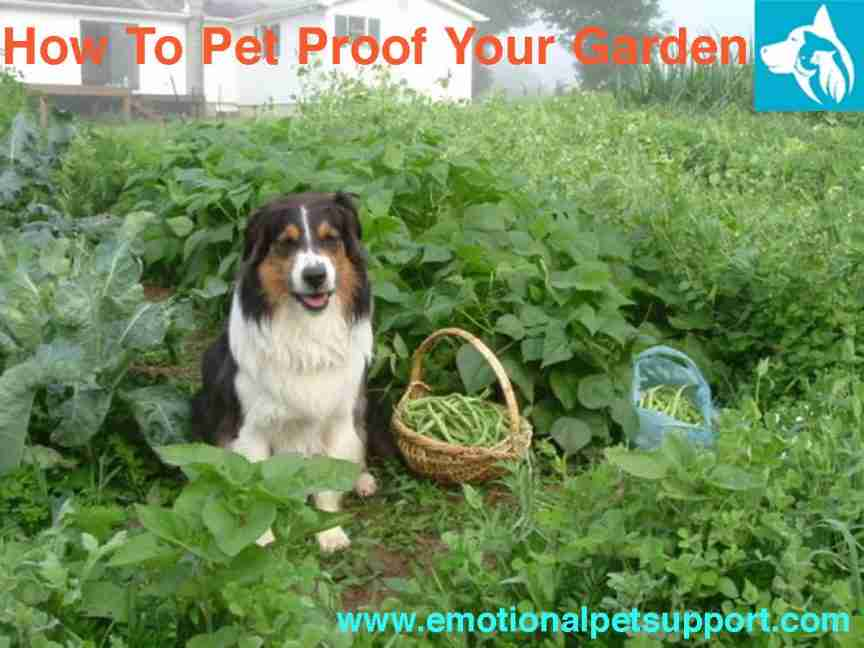 Pet Proof Garden