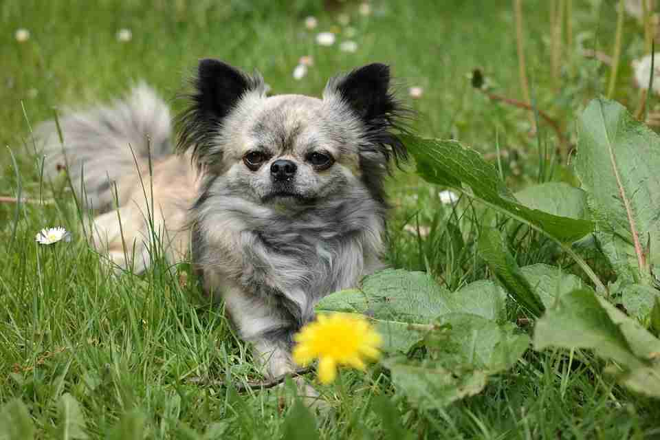 Pet in a Garden