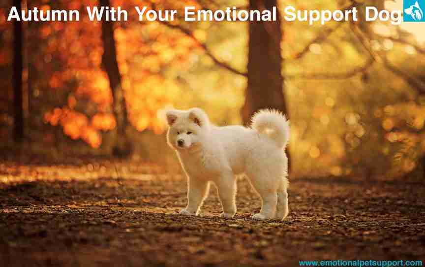 autumn emotional support dog