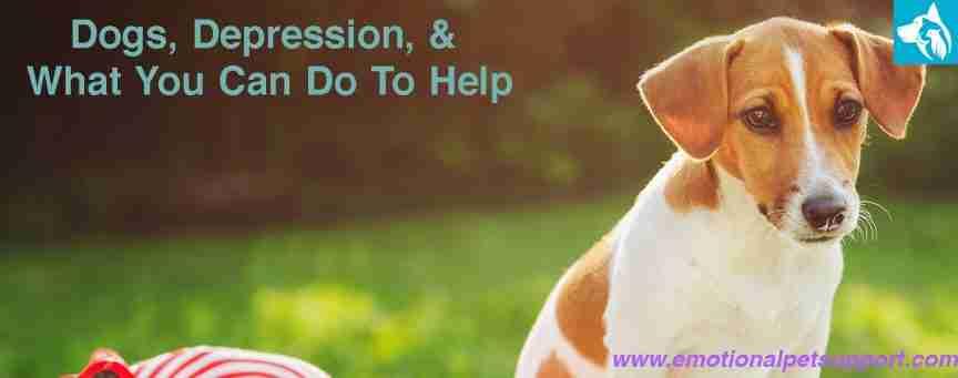 dogs depression