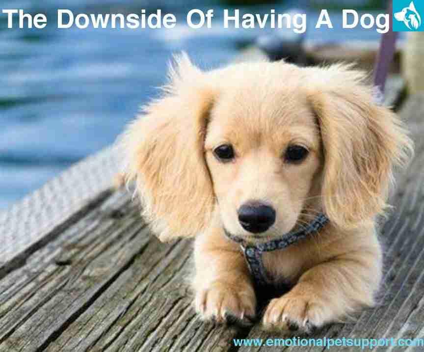 downside having dog