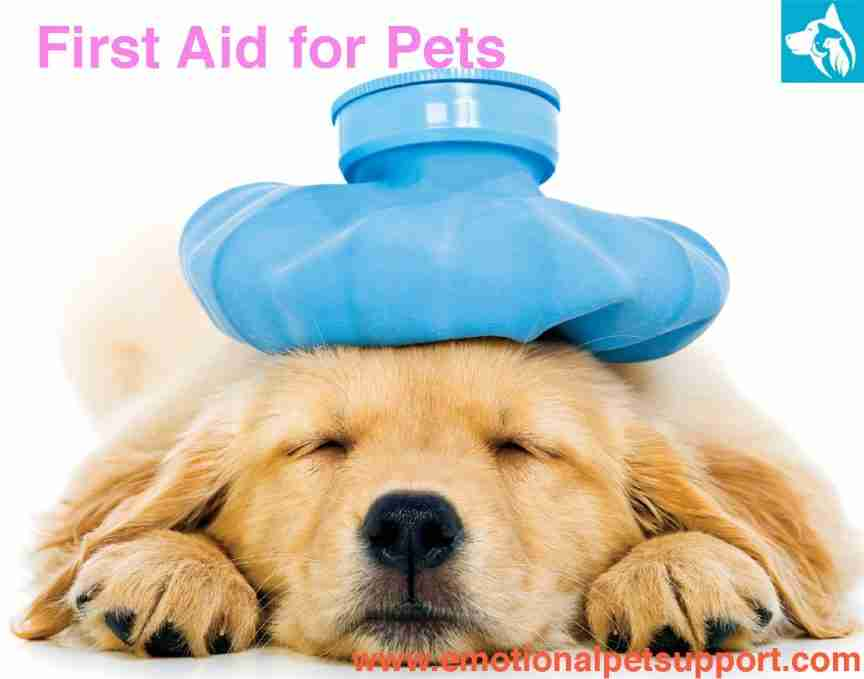 first-aid pets
