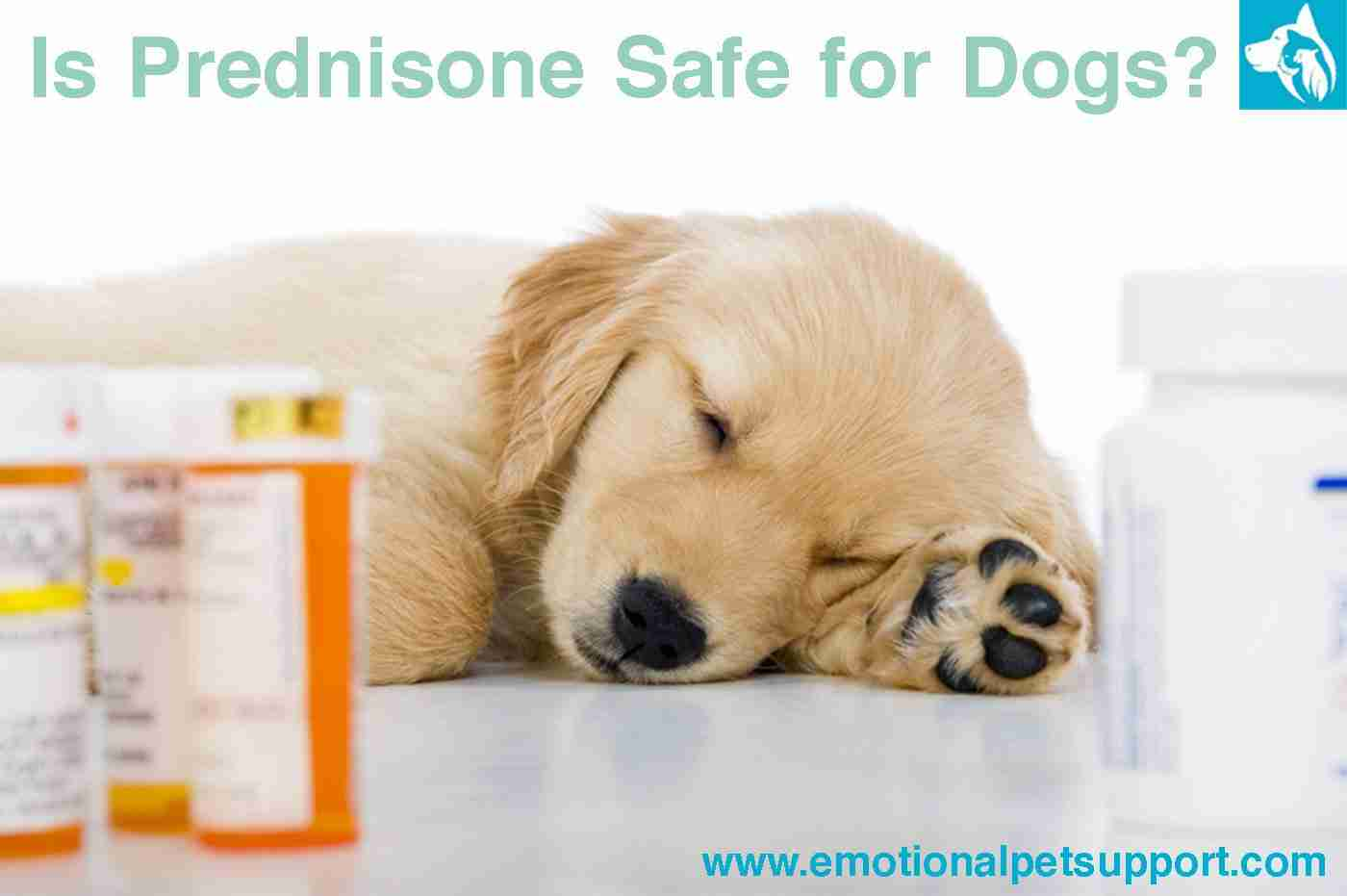 Steroids for dogs golden dragon chinese farnworth