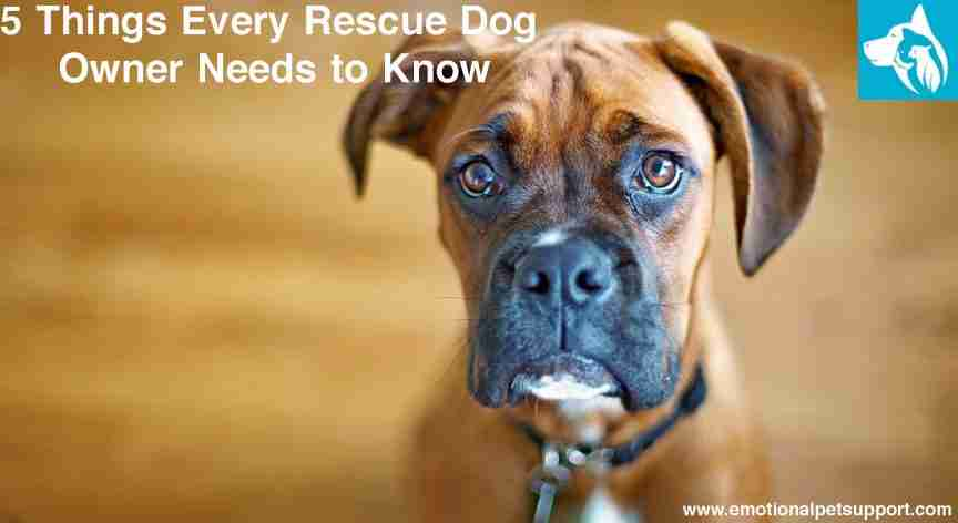 rescue dog owner