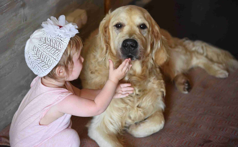 bring dog home
