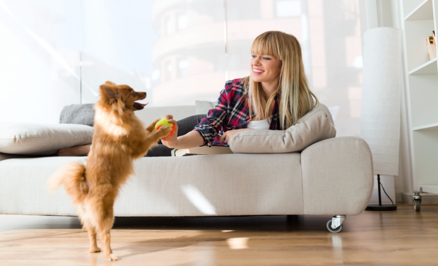 How To Make Your Dog Apartment-Friendly