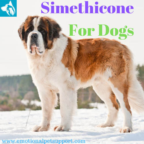 Simethicone For Dogs