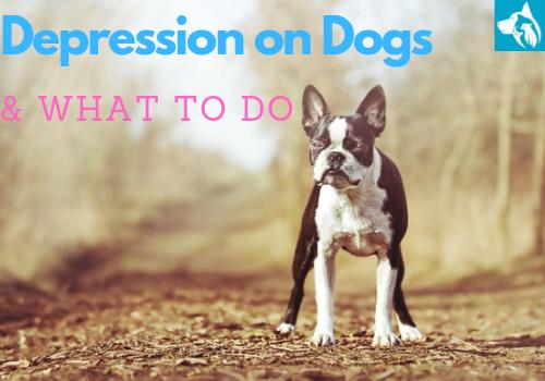 depression dogs