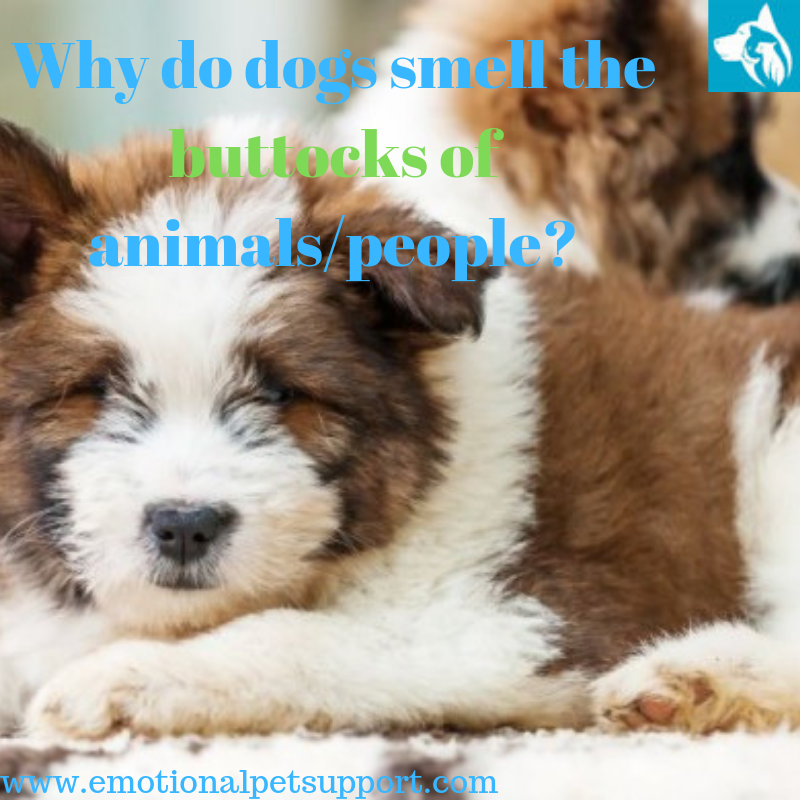 dogs smell buttocks of humans animals